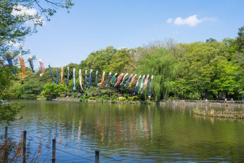 The resh green trees in Zenpukuji park,Tokyo