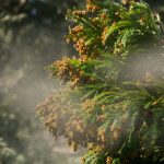 かゆくて痛い花粉を今年こそ撃退!今すぐやっておきたい花粉症の予防対策