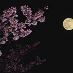 いい女は仕事帰りに春を楽しむ!東京都内の駅チカ夜桜スポット3選